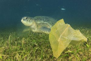 Plastic pollution problem: carrier bag discarded in sea threaten