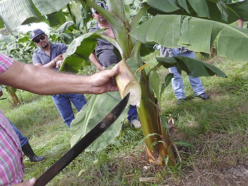 Plan del Agro de occidente inicia en marzo de 2017
